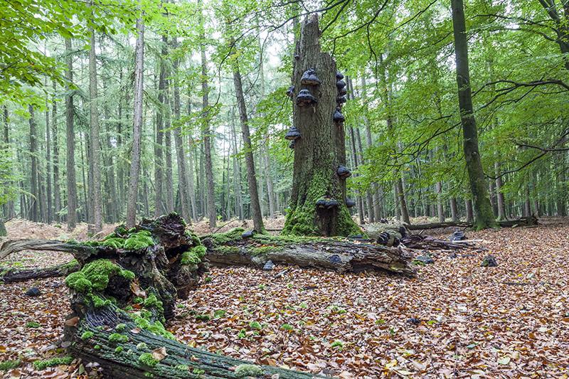 05-2015 boslandschap